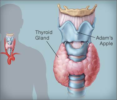 diet in thyroid in hindi .